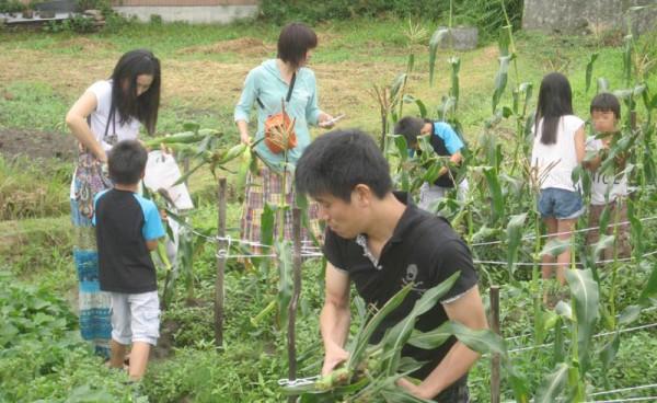 親子でトウモロコシ収穫体験
